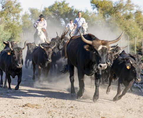 La Camargue et sa gardiane de taureau